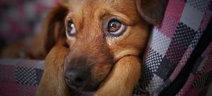 Hund Header Spenden für Tiere in Not