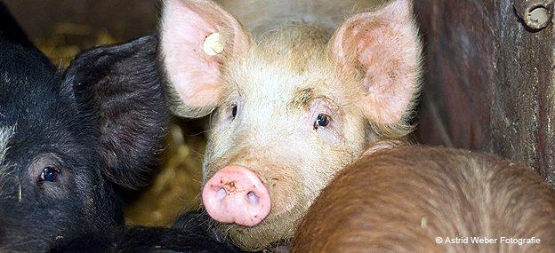 Spenden Tiere in Not Tierschutzgemeinschaft Stelliche Ein Licht der Hoffnung