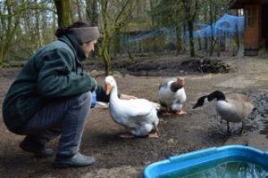 Spenden Tierschutz Gnadenhof Stellichte
